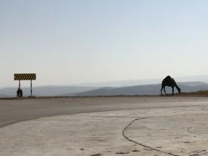 Kamele im Oman - Julian Weinert